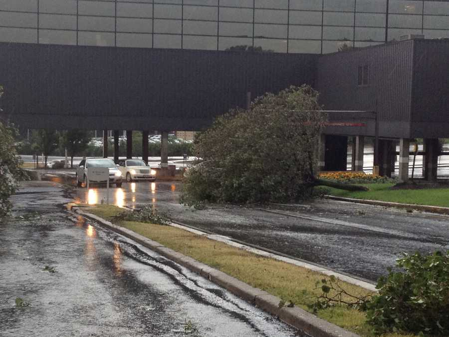 A look at some of the trees which blocked the main entrance to the Monroeville Mall after the storms moved through.