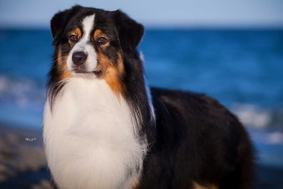 A 6-year-old championship show dog is missing after being startled by July Fourth fireworks and jumping over a backyard fence. (Read Full Story)