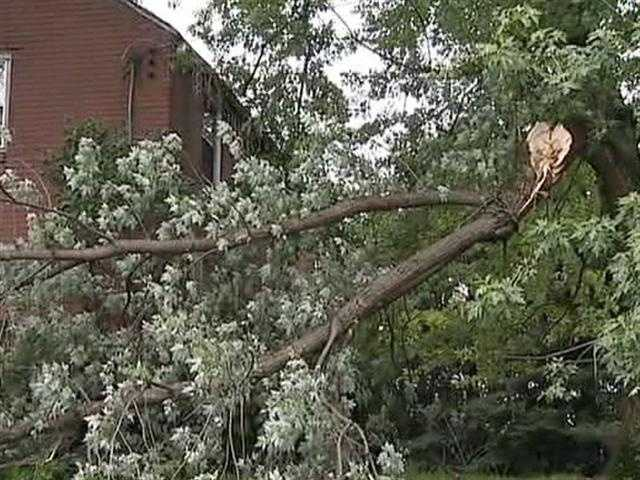 A large branch snapped off a tall tree on Elm Drive in Penn Hills.