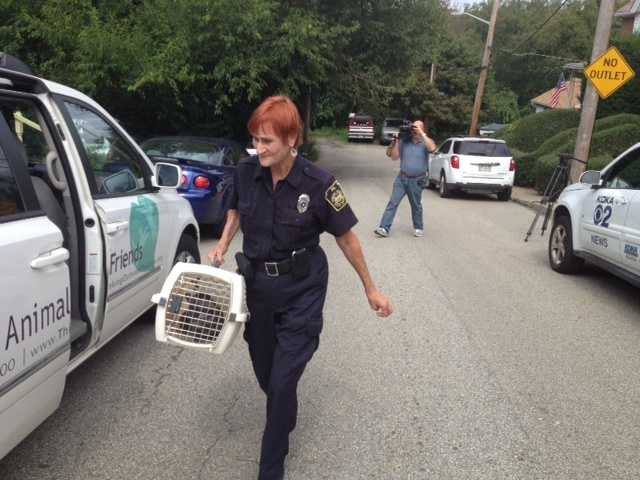 Animal Friends humane agent Kathy Hecker removes cats from a Carrick home.