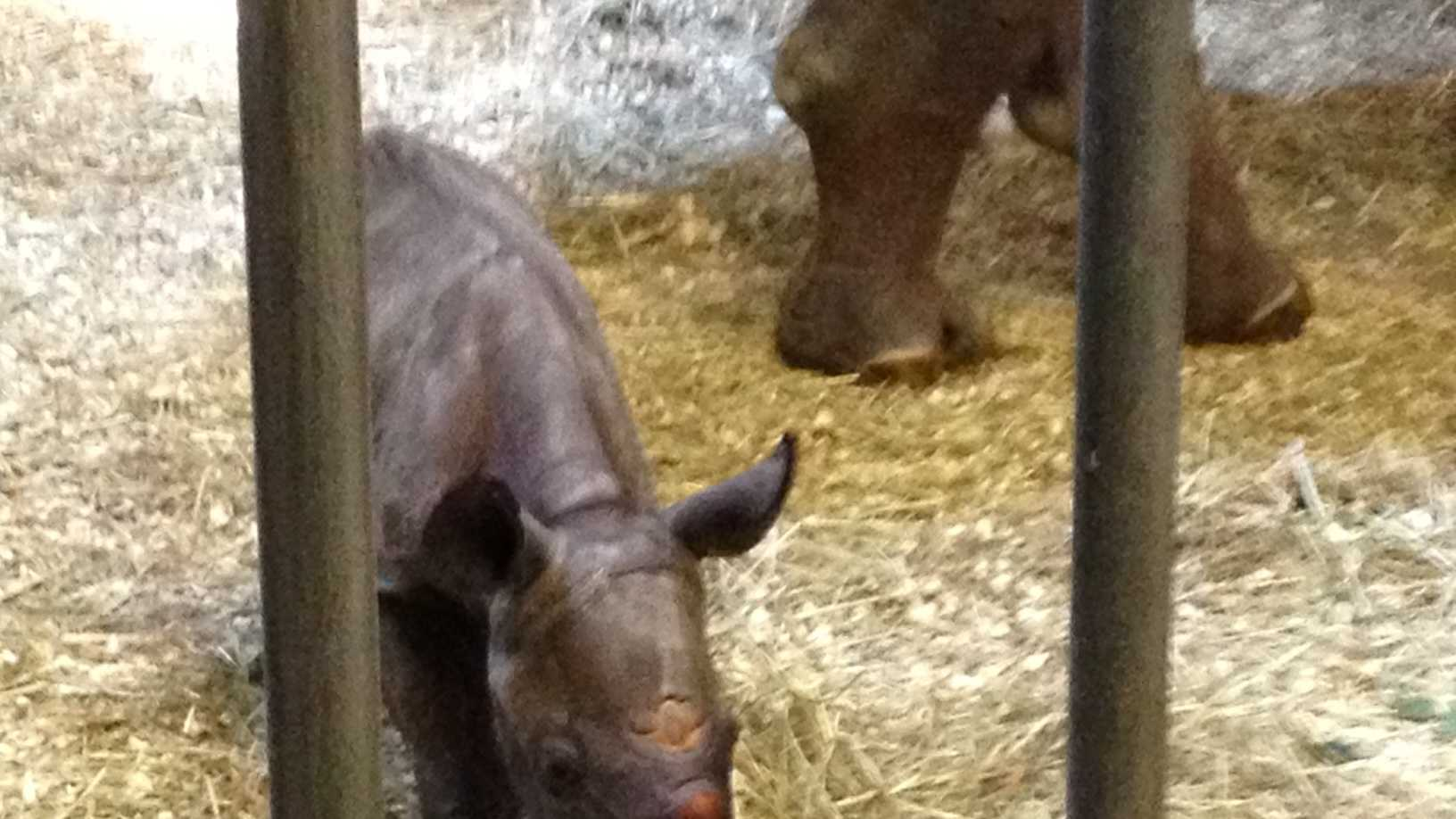 The Pittsburgh Zoo & PPG Aquarium has a new baby rhinoceros.