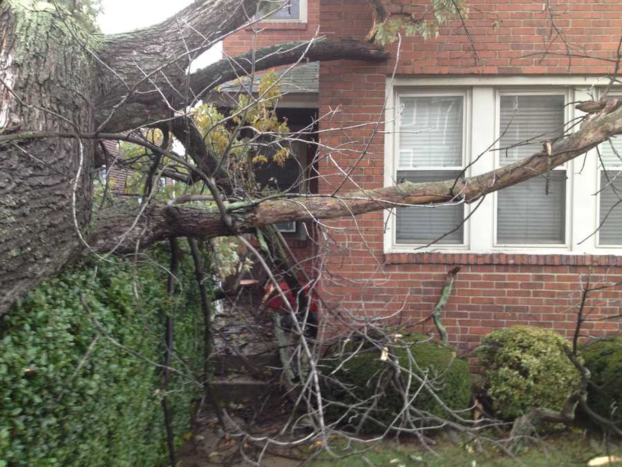 The tree did not go into the house, which is near the corner of Welfer Street.