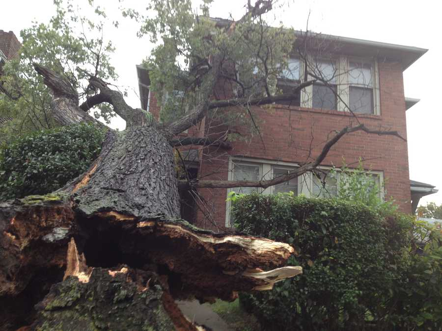 A large tree fell on a house on Murray Avenue in Greenfield on Wednesday morning.