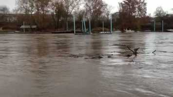 Debris floating down the swollen Yough River.