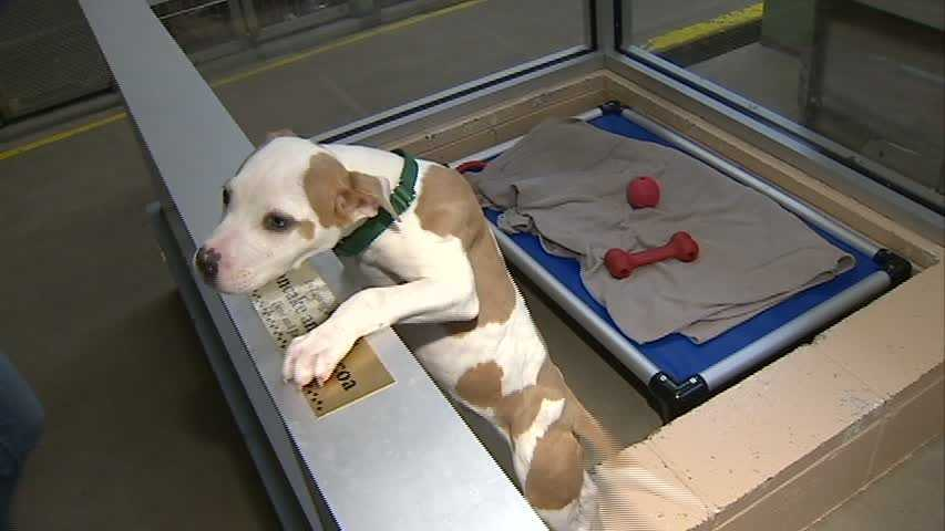 The national competition encouraged animal shelters to increase their adoption rates.