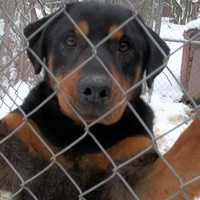 Jeannie Keller has until Jan. 25 to relocate all but 25 of her dogs after the state Department of Agriculture revoked her license to run Rom-Ger-Am Rottweiler Rescue kennel out of her Unity Township home.