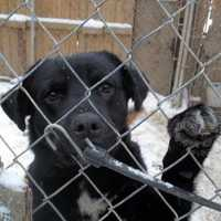 Most of the dogs are Rottweilers, but there are also other breeds available for adoption.