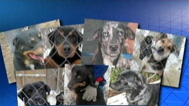 img-dogs in need of homes