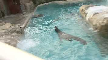 The zoo set up a heating platform for sea lions to keep warm.