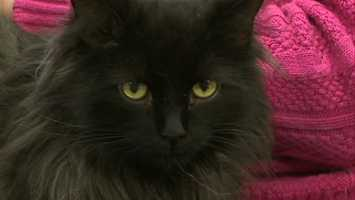 A cat's personality plays a big factor in where it will be placed in the shelter.