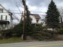 Channel 4 Action News' Bob Mayo reported from the 1100 block of Pennsylvania Avenue, where the tree was sprawled out on the front lawn.