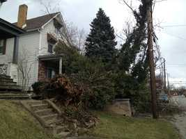 Several of its limbs landed on the roof of the front porch, but the home didn't sustain any significant damage.