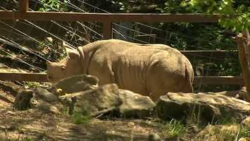 The Pittsburgh Zoo and PPG Aquarium is putting its own spin on Cinco de Mayo this Sunday to celebrate its newest baby rhino.