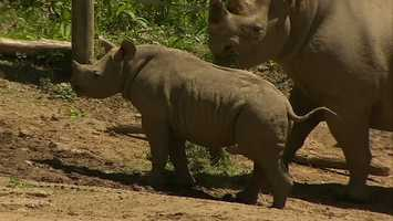 The Fragassos then contacted the zoo about having a chance to name the baby rhino.