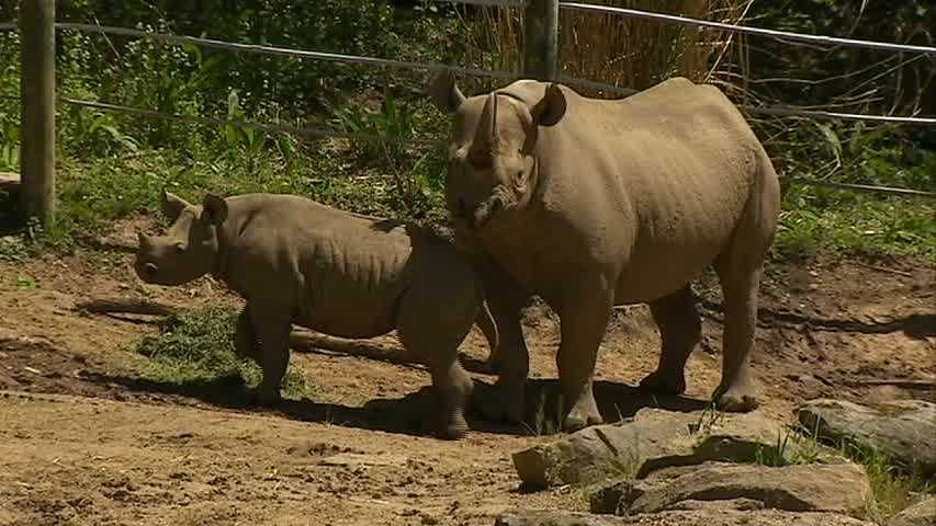 """""""We were looking for a name that would suit the baby rhino's strong personality and spirit,"""" said Barbara Baker, zoo president and CEO. """"But we also wanted a name that had special meaning. Janine means spirit and magical creature."""