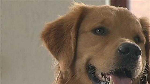 Local Man's Dog Inspires Worldwide Phenomenon