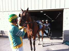"""Michelle Wright had faith in her horse, """"The Wright Stuff."""" Her driver, Mike Wilder, advised her to hold on."""