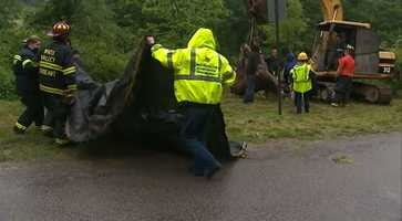 It took about 90 minutes to rescue a trapped horse from a Westmoreland County creek bed Thursday morning.