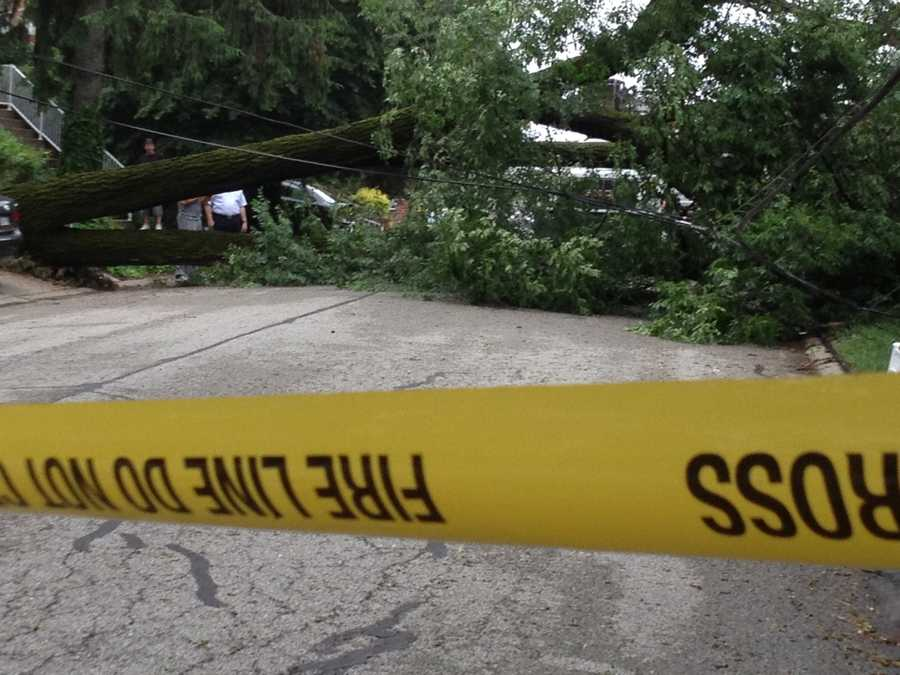 A large tree fell across Oakville Drive in Green Tree.