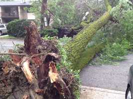 Nobody was hurt, but the large tree was blocking traffic.