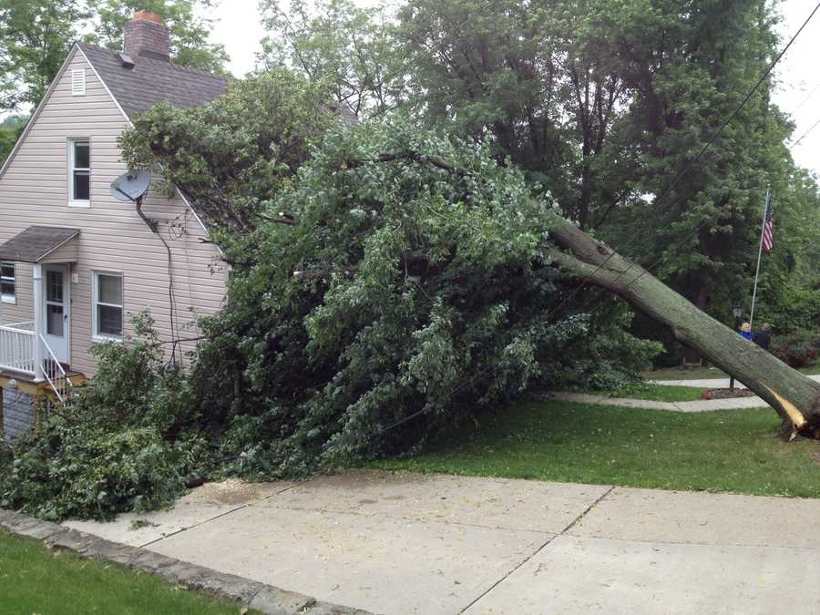 A large tree fell on a house on Crane Avenue in Beechview.