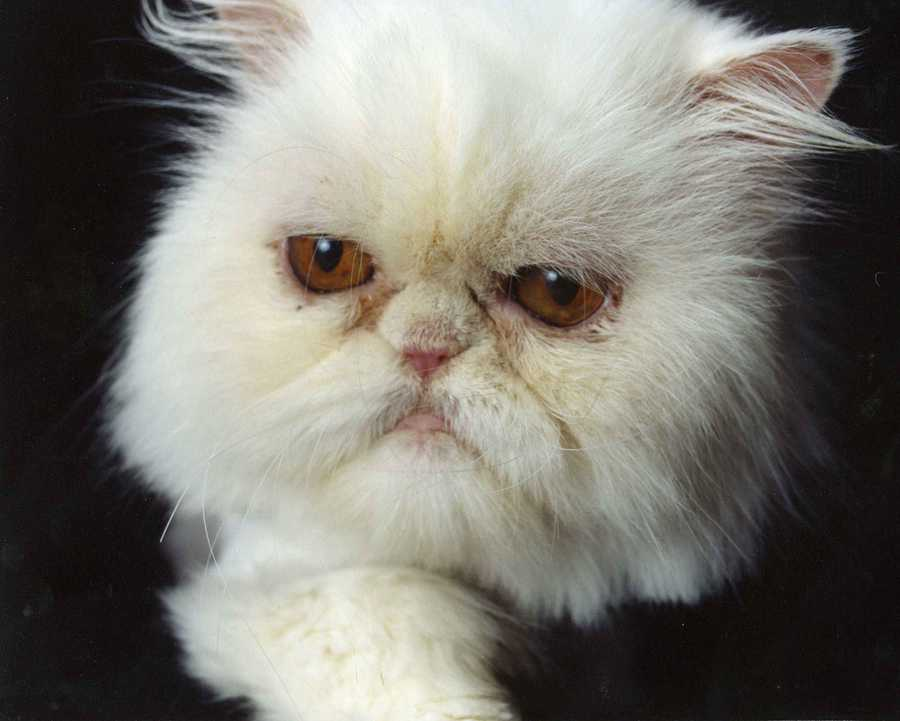 Ashley is also a dedicated animal advocate. She adopted her Persian cat, Bella, from the Persian Rescue in Virginia.