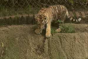 It's the baby cub!