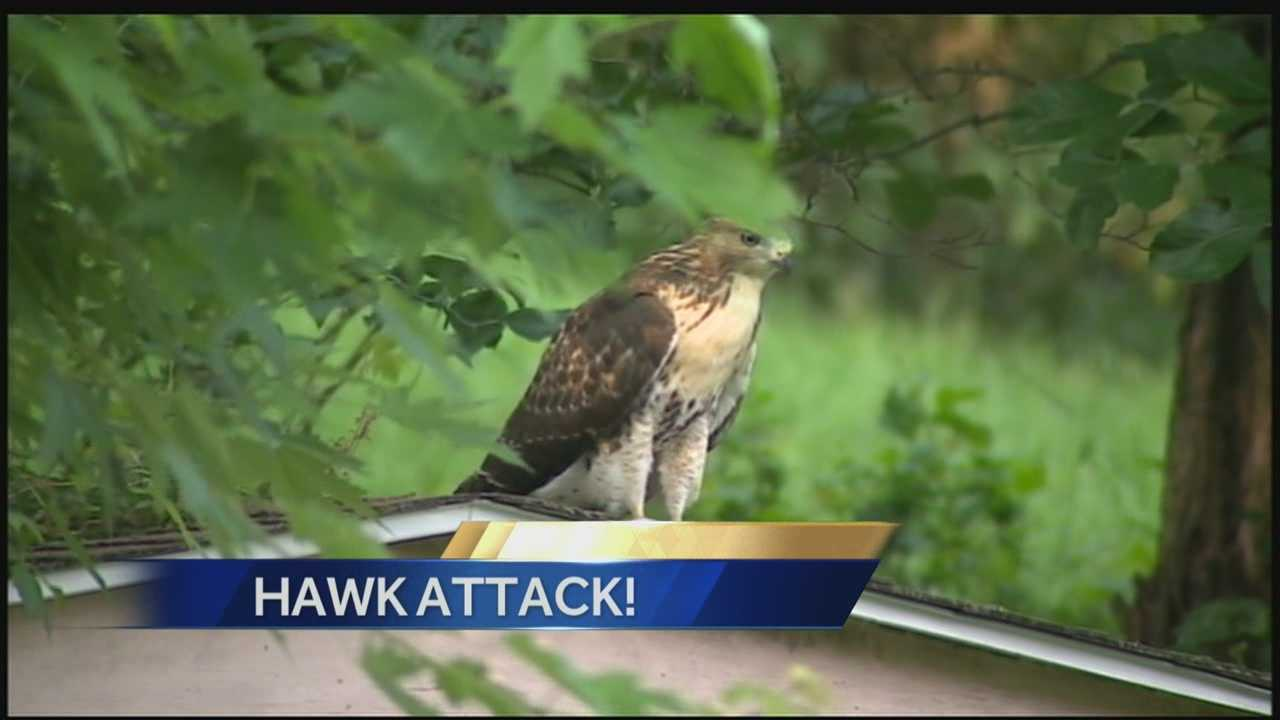 Hawks attack three in Churchill