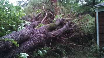 This huge tree fell and damaged Tom Coulter's house on Carnahan Road in Banksville during a severe thunderstorm.