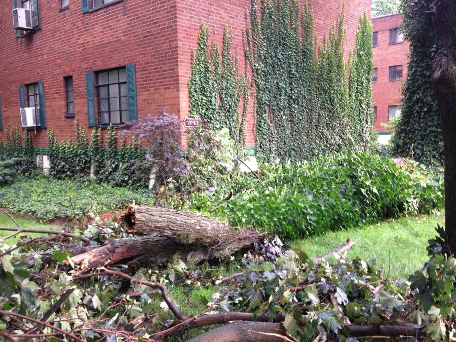 A tree comes down in Highland Park near North Negley Avenue and Hampton Street