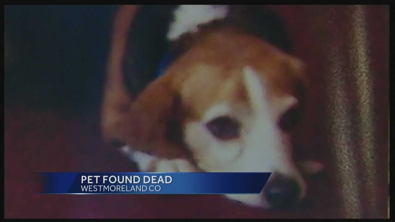 missing beagle found dead