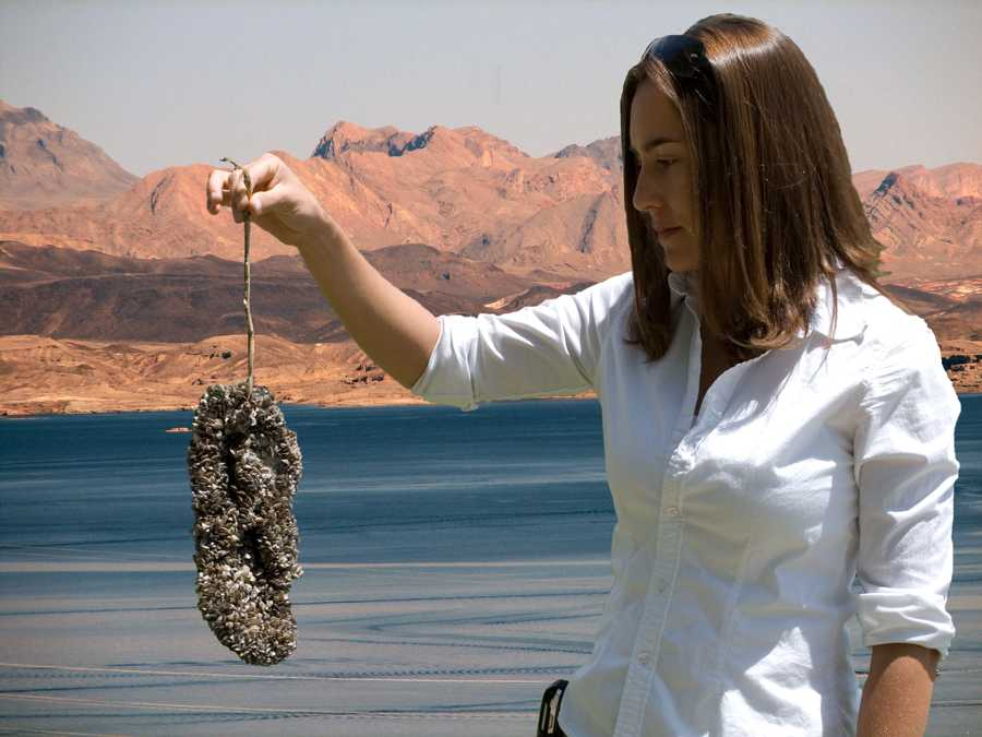 The mussels reproduce rapidly and are also filter feeders, removing substantial amounts of plankton from the water and the food chain.