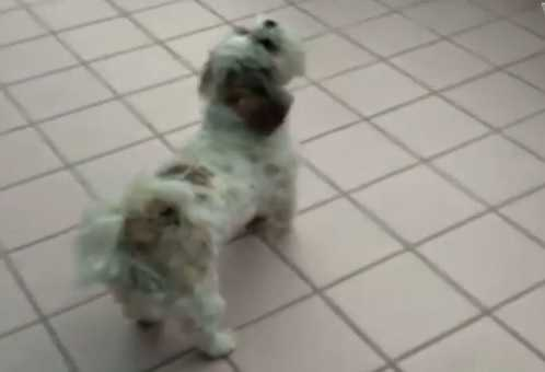 Her family's dog hates Justin Bieber. (Maybe. You be the judge.)