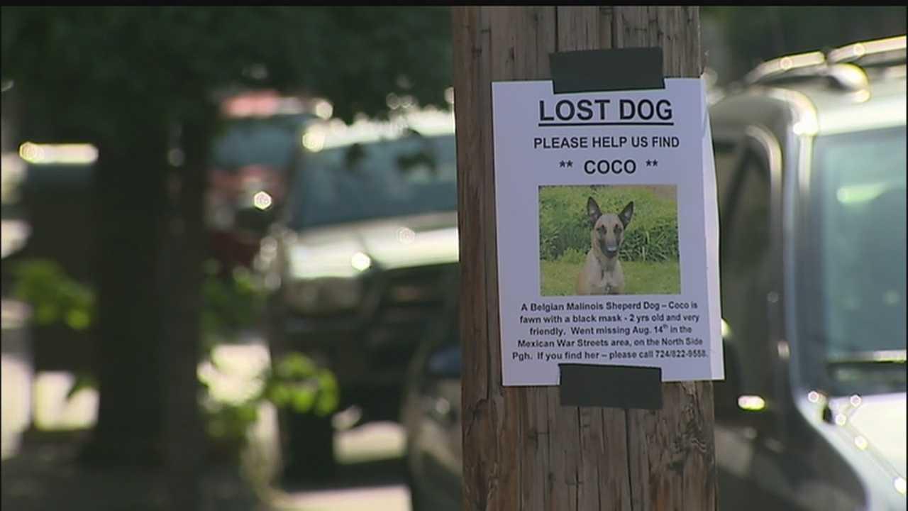 img-Hero dog goes missing