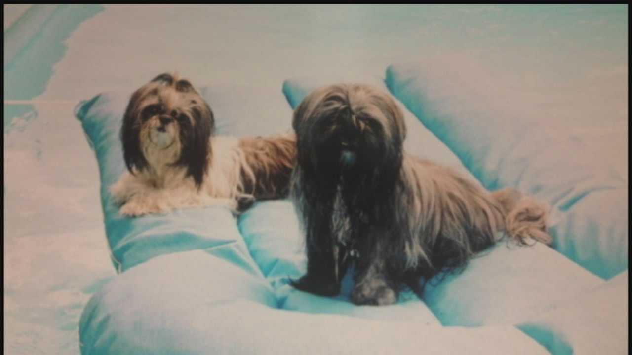 Mark Fabich's dogs