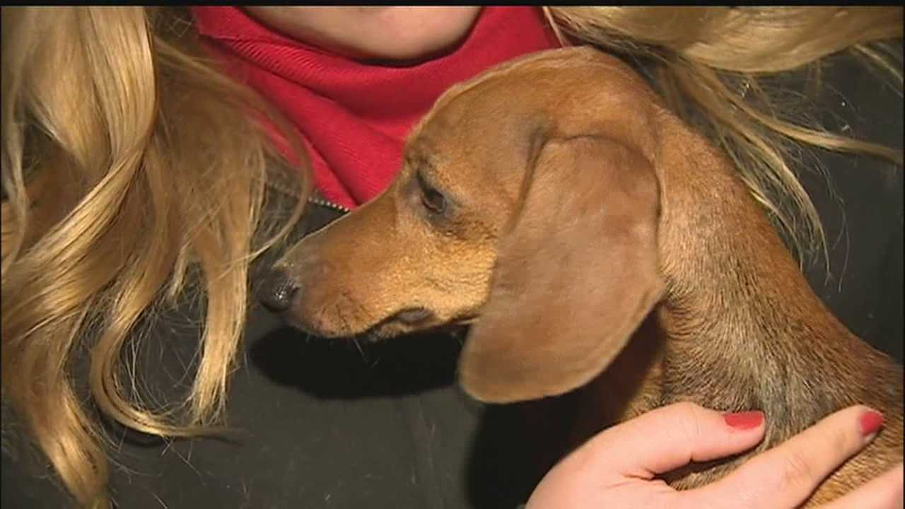 Dog stuck behind wall more than 2 hours&#x3B; Rescued by volunteer firefighters