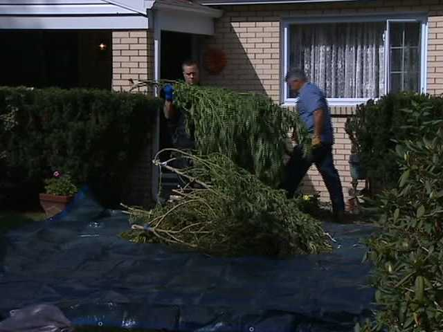 Huge marijuana plants and equipment for growing the plants were found in another house next to the one that exploded, police said.