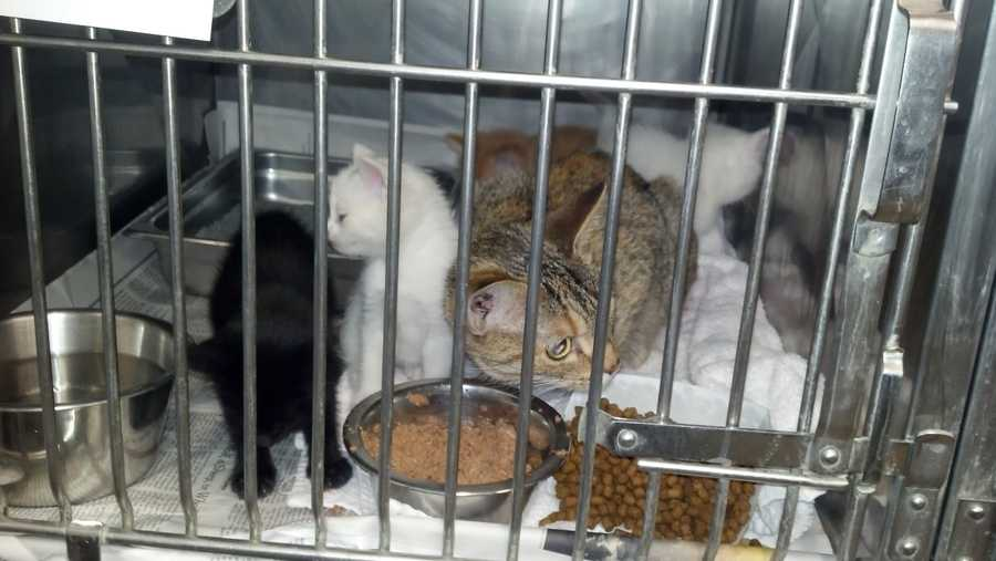 """""""These weren't stray cats. They were somebody's cat and kittens,"""" ARL executive director Dan Rossi said. """"They seemed to be healthy, although they didn't have any food or water in the box."""""""