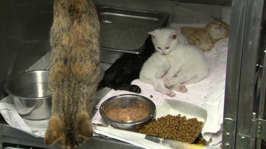 The cat and the kittens were given shots, vetted and found to be OK. They'll be available for adoption in a couple of months.
