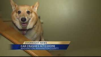 The dog and its owners were not hurt when the car hit the house.