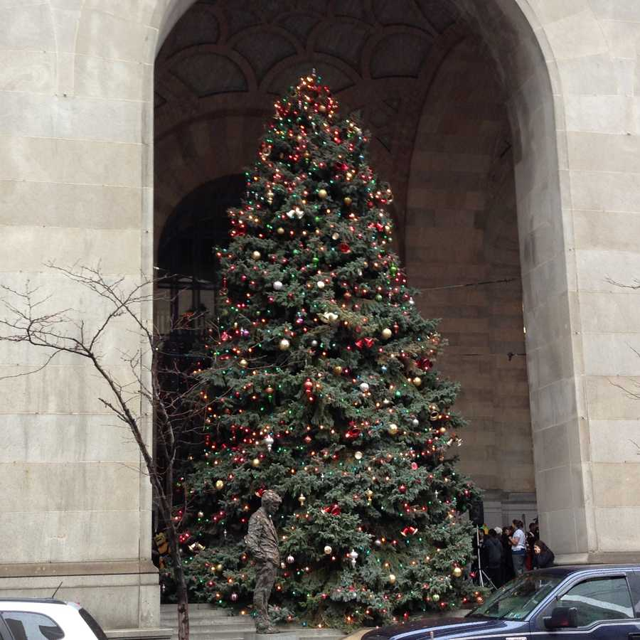 The tree is on display on the steps of the City-County Building.