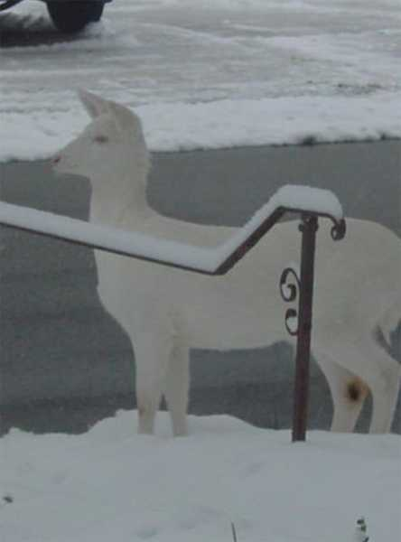 There was an unusual sight Wednesday in Pleasant Hills.