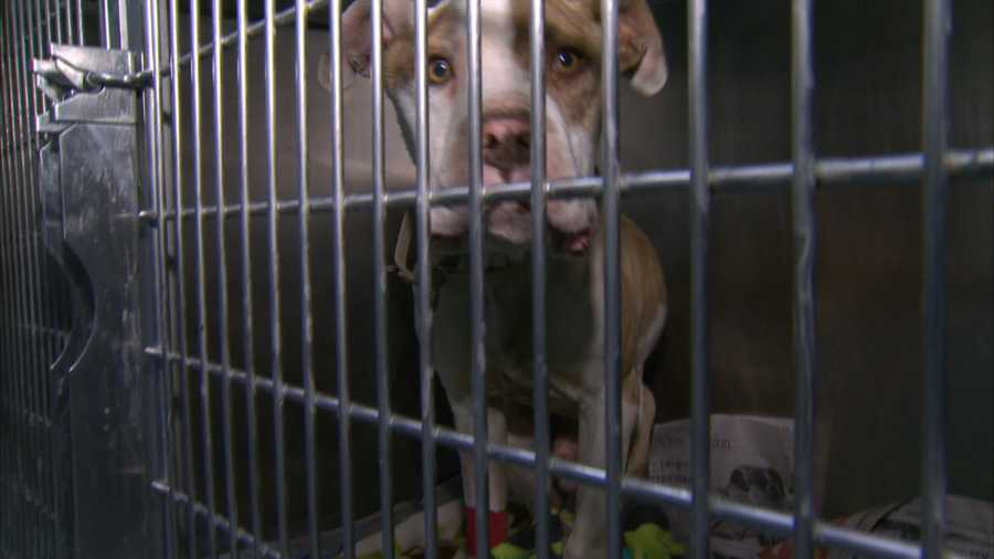 Rossi said it will take several months and thousands of dollars before the dog is ready for adoption.