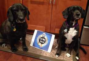 """""""Get Well wishes for K9 Officer Rocco, from Jack and Vista!""""A WTAE viewer shared this photo on u local. Send your pictures to ulocal@wtae.com."""