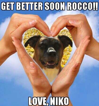 """Support for Rocco, from Niko""A WTAE viewer shared this photo on u local. Send your pictures to ulocal@wtae.com."
