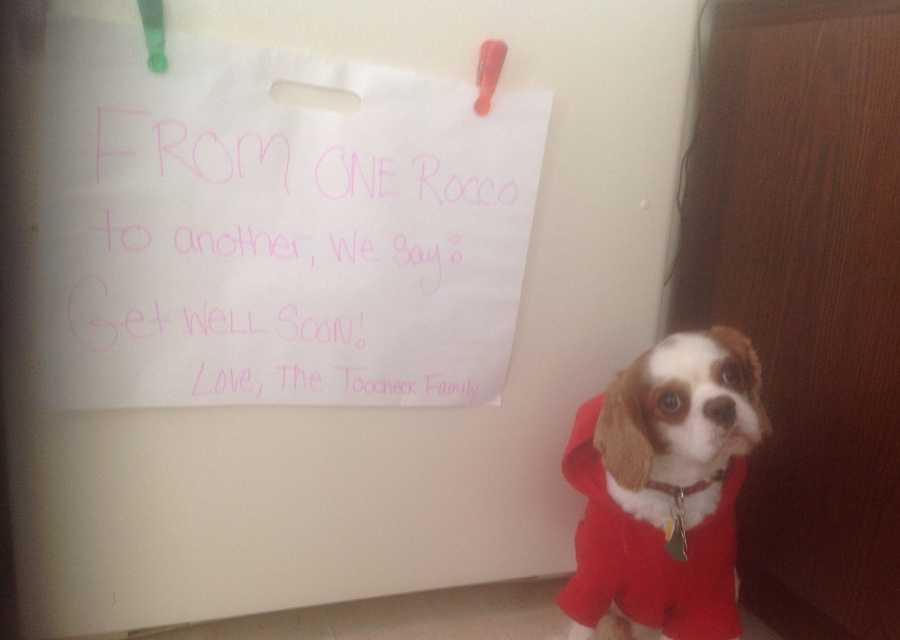 """Get Well K-9 Rocco from the Toocheck family in Plum""A WTAE viewer shared this photo on u local. Send your pictures to ulocal@wtae.com."