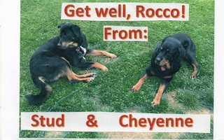 """Carol Giger, of Ross Township, shared this photo of """"Stud"""" & """"Cheyenne"""" on u local. Send your pictures to ulocal@wtae.com."""