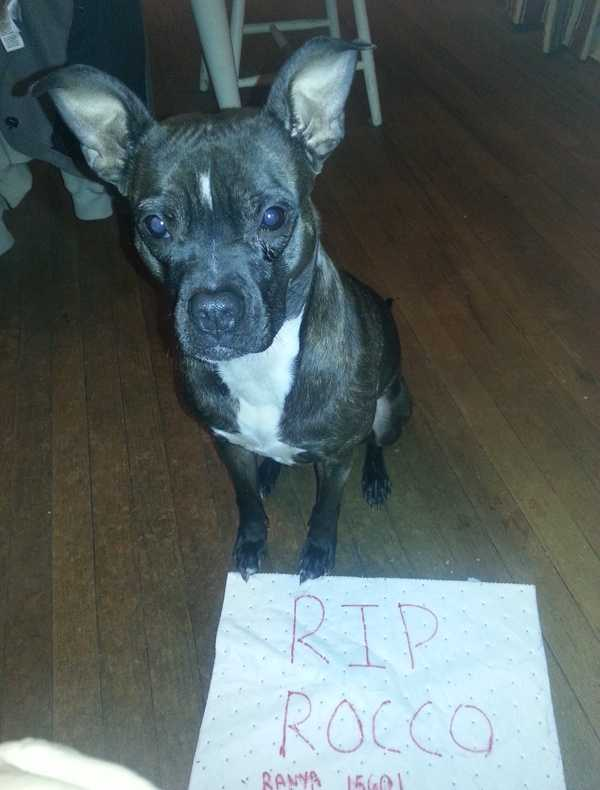 """R I P officer Rocco...Bill and Rayna Gbg PA""A WTAE viewer shared this photo on u local. Send your pictures to ulocal@wtae.com."