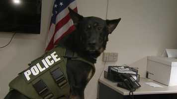 Bauer, who has worked with K-9s since 1992, said she applied for the vests in November and heard back two days later.