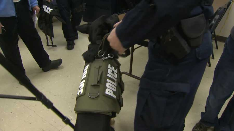 """""""These not only are bulletproof, but they're stab-resistant. A dog is worth ... he's priceless. He's worth tens of thousands of dollars. When you put this vest on him, he's safe,"""" said Sgt. Kari Bauer."""